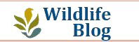 May Isle wildlife Blog